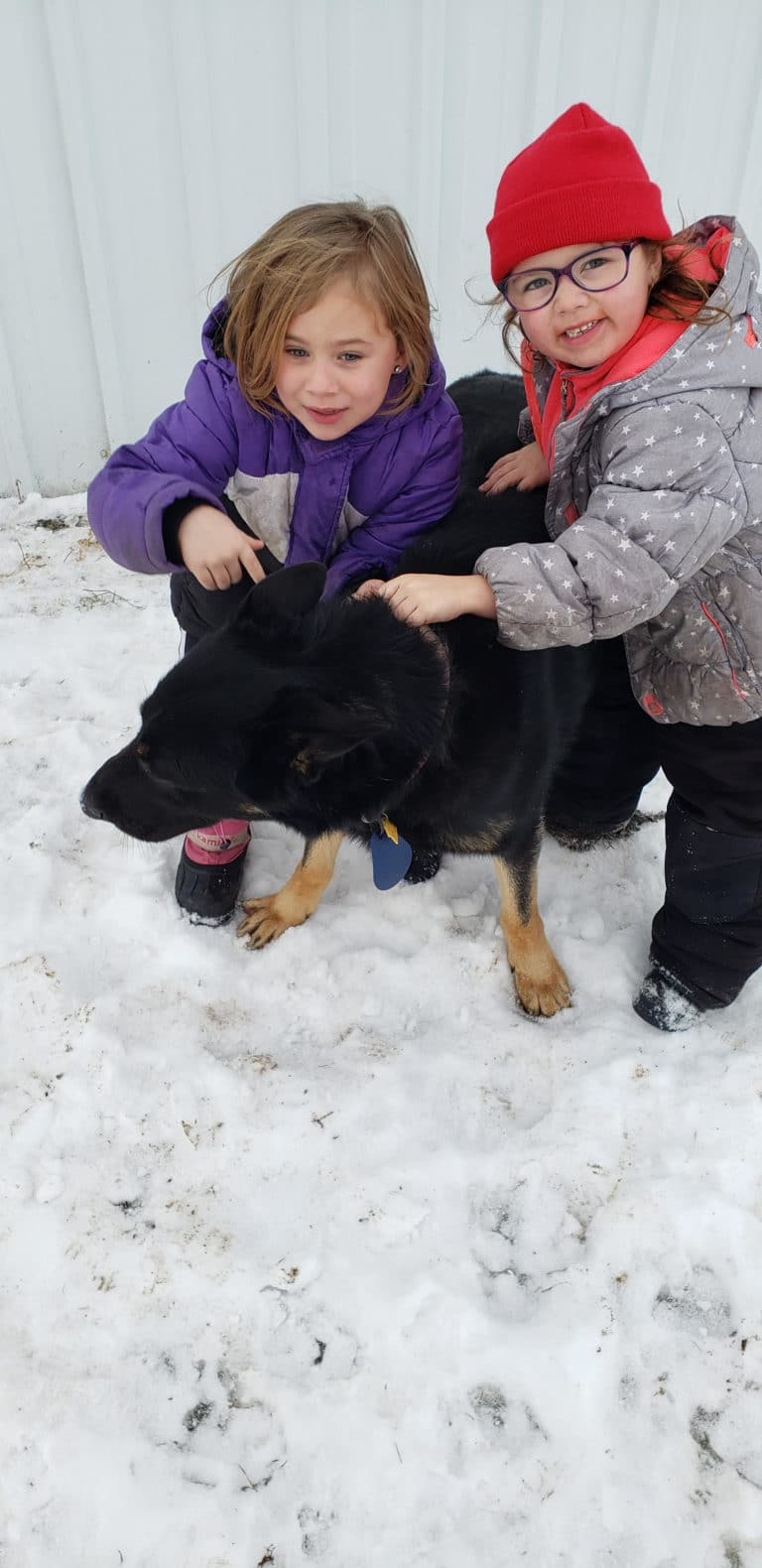 Buy Sire Puppy near Badger