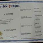 Jack SmithFarms German Shepherds Male Breeder Certification