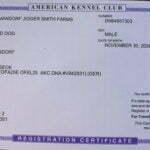 Jigger All Black Male German Shepherd Dog Certification